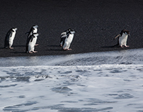 Antarctica - Wildlife
