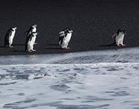 antarctica's wildlife