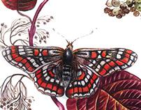 Butterflies in watercolor