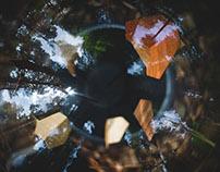 Leaf - Richard Mignot