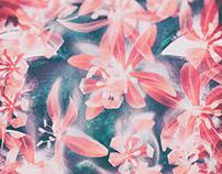 /ˈeɪljən//ˈflaʊə/ - alien flower