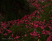 FALLEN CAMELLIA AND LEAVES...