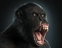 Shimpanzee