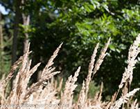 Naturwunder-Pflanzen