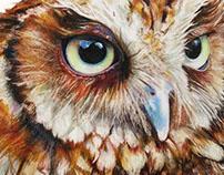 Tropical screech owl 𝑀𝑒𝑔𝑎𝑠𝑐𝑜𝑝𝑠 𝑐𝘩𝑜𝑙𝑖𝑏𝑎