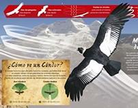 Infografía Zoo La Plata - Cóndor Andino