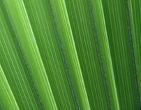02 / 11 - Green leaf