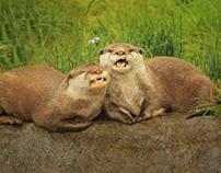 Mr & Mrs Otter