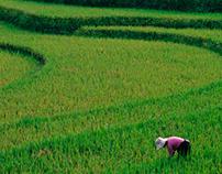 ACTING PEOPLE - VIETNAM