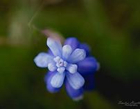 Macro Photography-Flowers/Plants