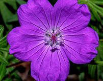 Purple jewels...