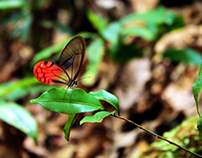 Exotic Butterfly and Insect