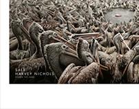 Harvey Nichols - Pelicans