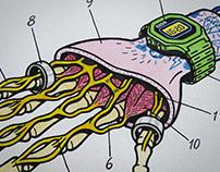 Street Anatomy