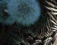 Fractales nocturnos montevideanos
