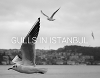 Photography - Gulls in Istanbul