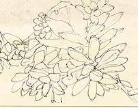 Flores da China            (sketching flowers)