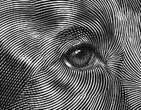 Black and White Illustration of a Setter