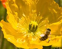 Napa Valley Bees