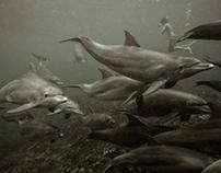 Kizimkazi Dolphins Zanzibar