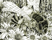 Book illustration (Bee)