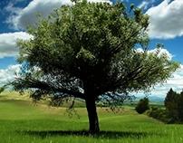 Nature Academy - Tree