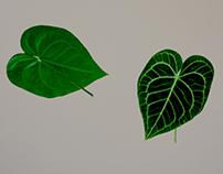 Specimens of Flora