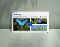 Bloomna Minimalist Presentation Template