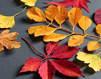 Paper Autumn Leaves
