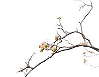 Flora Spring