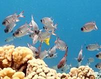 Diving the Tuamotu's