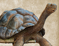 Galapagos Tortoise Illustrations