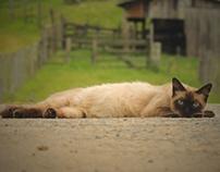 Minha gatinha