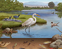 California Wetlands Illustrations