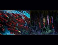 Salmon Series- 2006