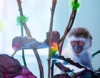 Parrot Monkey