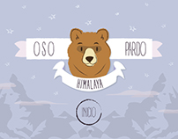 Oso Pardo (Himalaya)