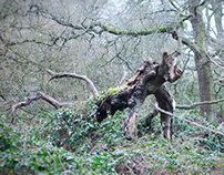 Of trees and other monsters (Hampstead Heath trees)
