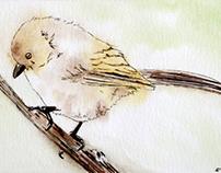 Bushtit Bird