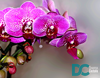 Orchid Flower Photography