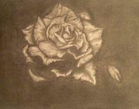 Essay on a petal