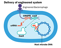 Berkeley Lab CRISPR figure Illustration