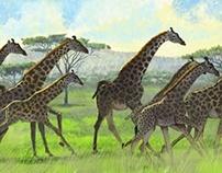 Running Giraffe Herd