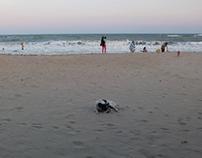 Beach & Dogs