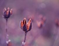 Natural Blossom