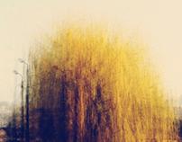 Season's trees