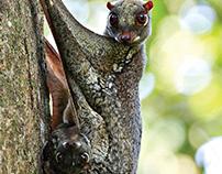 Geometric Animal - Lemur