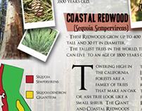 Magazine Layout Design - Trees