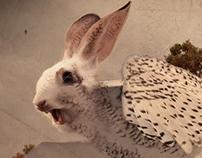 Animal Photo Manipulation