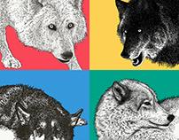 Yamnuska Canine Illustrations